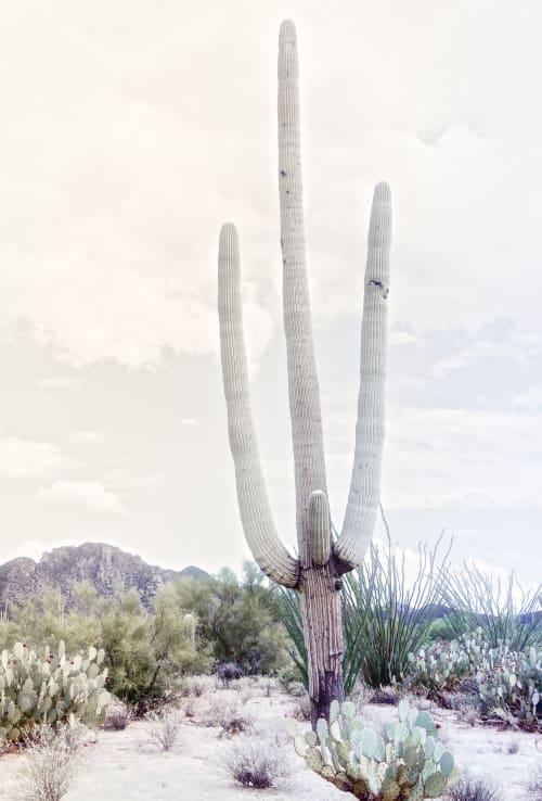 Photography by Kristin Hart Studios - SAGUARO DESERT - LIGHT GREY