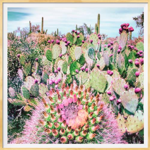 Photography by Kristin  Hart  Studios seen at Tucson, Tucson - DESERT DREAMS, TUCSON  and  CACTUS GARDEN, TUCSON