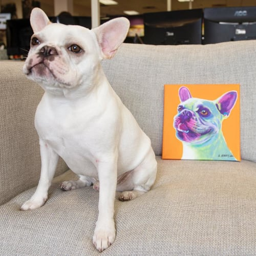 """Paintings by Alicia VanNoy Call seen at Private Residence, Morton Grove - """"French bulldog"""" Painting"""