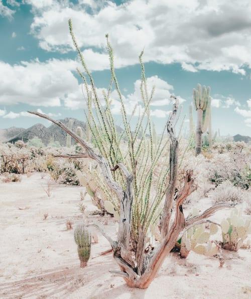 Photography by Kristin  Hart  Studios seen at Creator's Studio - DESERT GARDEN - SOFT TEAL