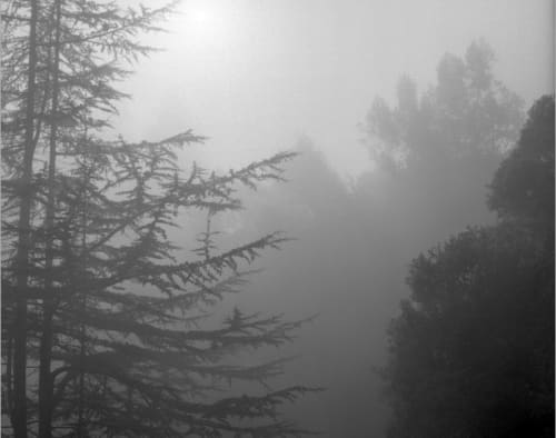 Photography by Tabitha Soren seen at Private Residence, Houston - Weathering - Black and white, fog, trees