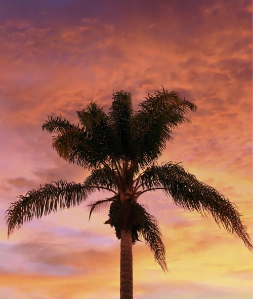 Photography by Zach Wolkstein seen at Private Residence, Los Angeles - Palm Tree
