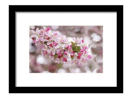 Photography by Vanessa Thomas seen at Dublin Civic Center, Dublin - Cherry Blossom Spring at Dougherty