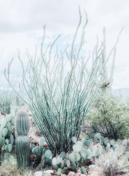 Photography by Kristin  Hart  Studios seen at Tucson, Tucson - Desert Garden - Turquoise