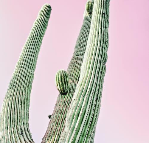 Photography by Kristin Hart Studios - CACTUS - PASTEL