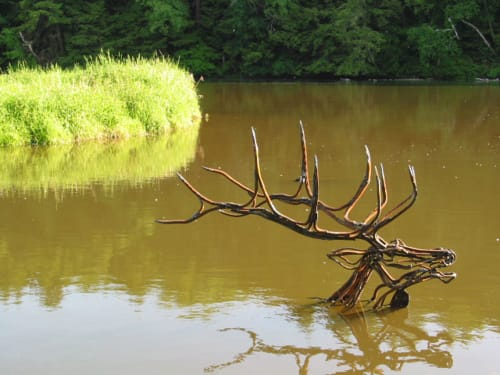 Public Sculptures by Wendy Klemperer Art Inc seen at Great Barrington, Great Barrington - River Elk Swimming