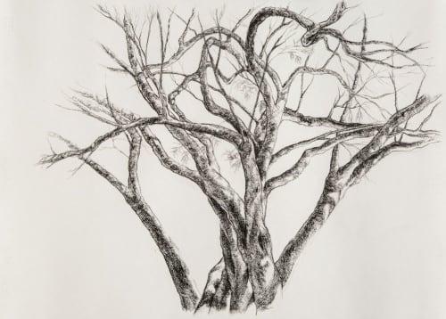 Paintings by Lisl Barry seen at Oudtshoorn, Oudtshoorn - Breath _ In Celebration of Trees