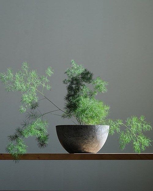 Vases & Vessels by Claire Bandfield seen at Pistils Nursery, Portland - Otis with asparagus fern