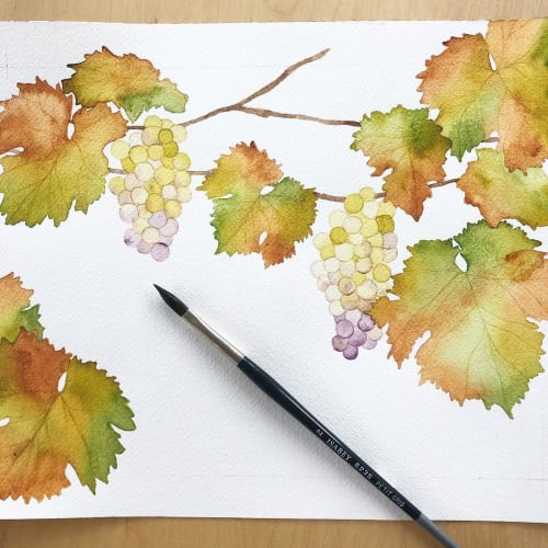 Sophie Tivona Illustration