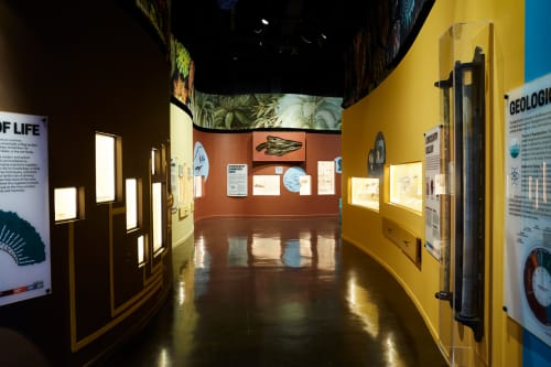 Interior Design by Sisal Creative at The Charleston Museum, Charleston - The Charleston Museum - Natural History Gallery