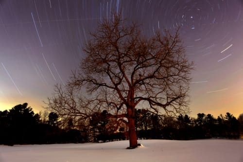 Black Walnut & North Star | Photography by Chris Becker
