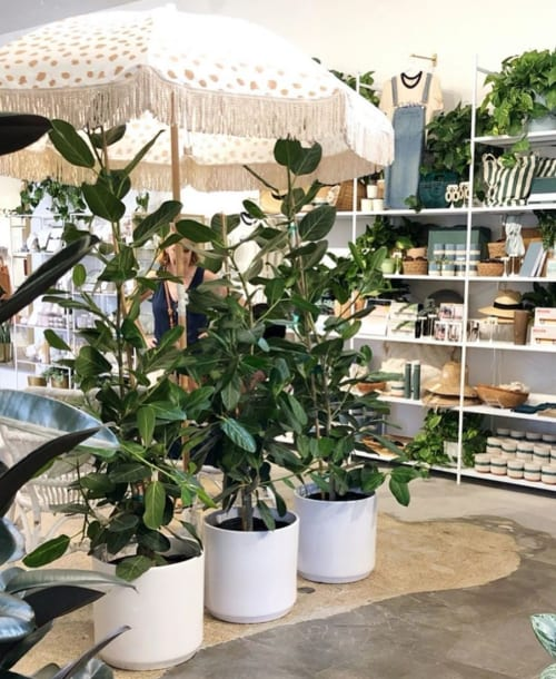 Plants & Landscape by LBE Design seen at Pigment, San Diego - Revival ceramics large cylinder planters
