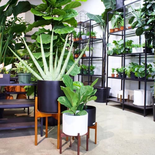 Vases & Vessels by LBE Design seen at The Plant Parlor, Grand Rapids - Revival Ceramics Planter and Stand
