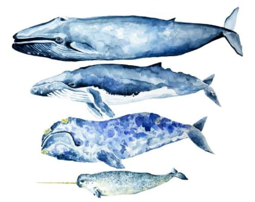 Paintings by Violette Tide Studios seen at Private Residence, Carrollton - Whale Watercolor Print