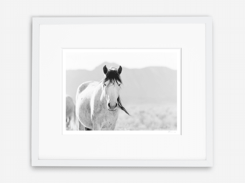 Photography by KT Merry Print Shop seen at Private Residence, San Diego - Majestic Mare