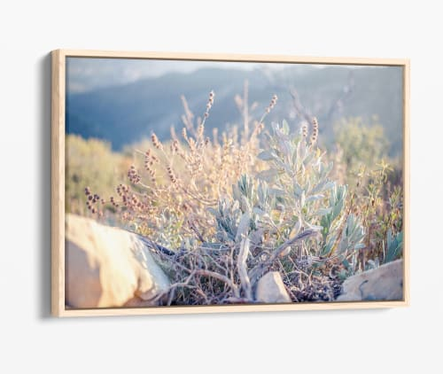 Photography by Kara Suhey Print Shop seen at Creator's Studio, Santa Barbara - Canyon Sage