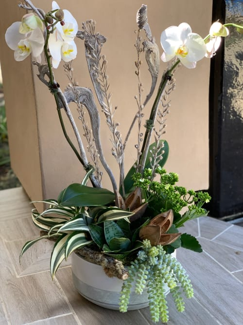 Floral Arrangements by Fleurina Designs - Pure white Orchid arrangement