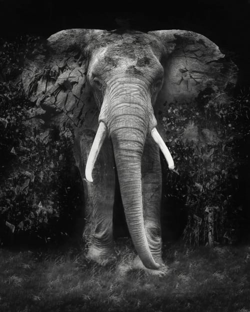 Photography by Erik Brede Photography seen at Hotel Gotham, Manchester - The Disappearance of the Elephant
