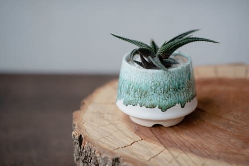 Plants & Flowers by Mini Plant Pot seen at Private Residence, New York - Small ceramic succulent pot - Emerald collection