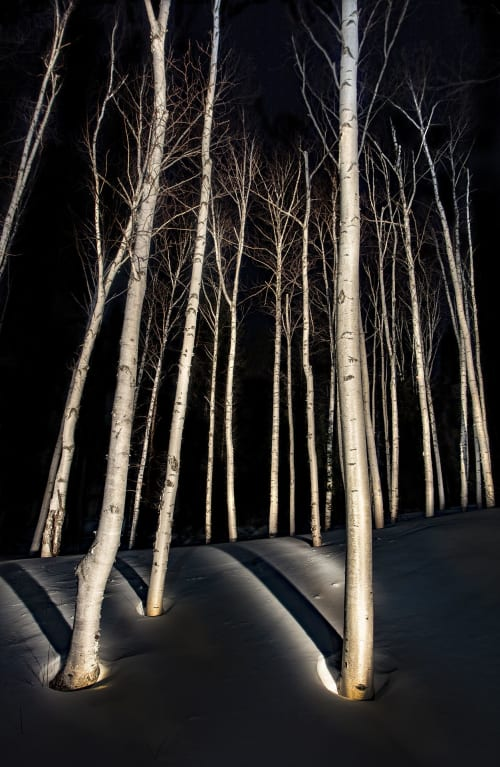 Birch Trees #7, 2019   Photography by Chris Becker