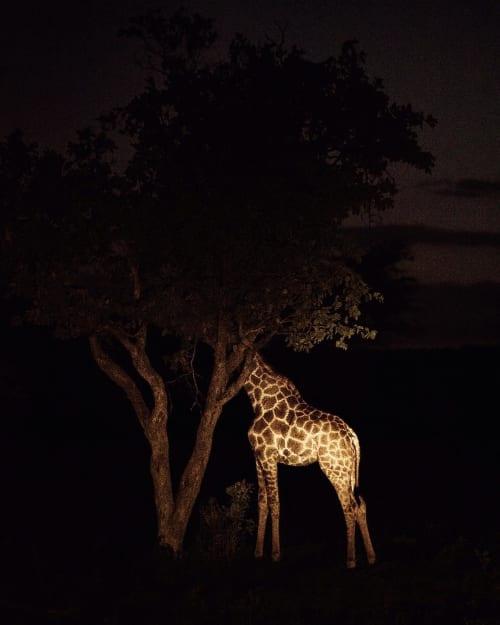 Giraffe   Photography by Susanne Walström   Eken in Södermalm