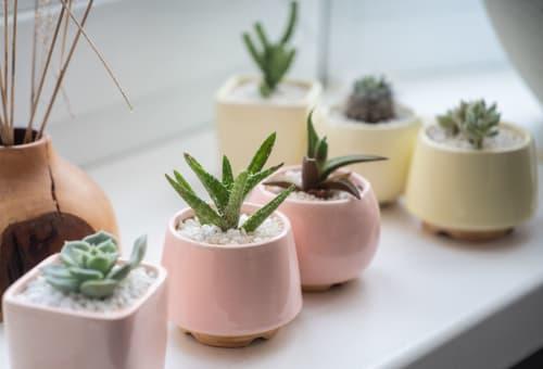 Mini Plant Pot - Plants & Flowers and Floral & Garden