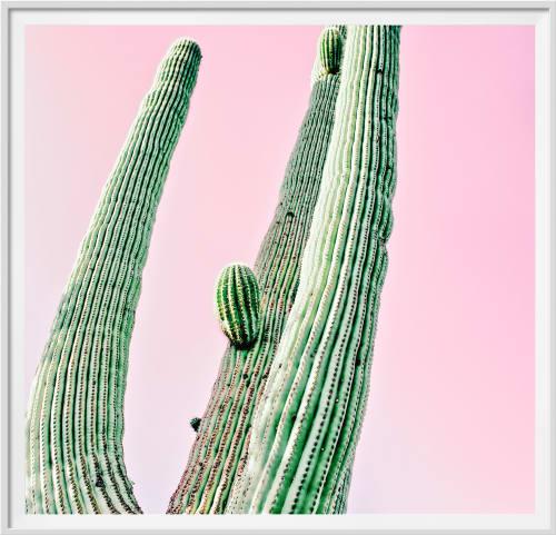 Photography by Kristin  Hart  Studios seen at Saguaro National Park - SAGUARA CACTUS - PASTEL