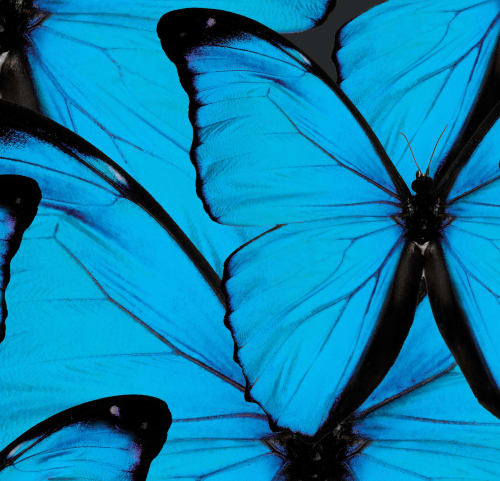 Wallpaper by FliePaper seen at Private Residence, Palm Springs - Blue Butterfly