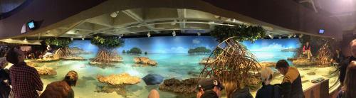 Murals by Robert Evans Murals, Inc. seen at New England Aquarium, Boston - Shark and Ray Touch Tank mural