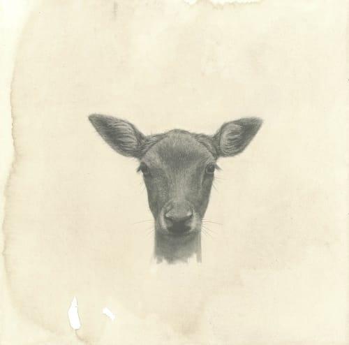 Deer  Drawing | Paintings by Meagan Donegan