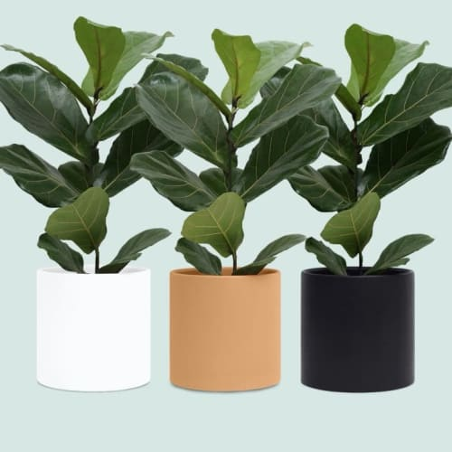 Peach & Pebble - Planters & Vases and Planters & Garden