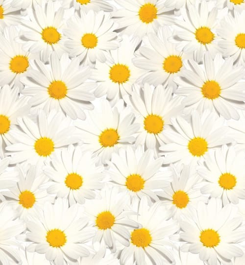 Wallpaper by FliePaper seen at Private Residence, Los Angeles - Mimi's Daisy
