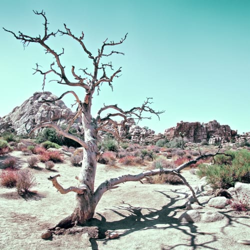 Photography by Kristin  Hart  Studios seen at Joshua Tree, Joshua Tree - PASTEL DESERT, CALIFORNIA 2