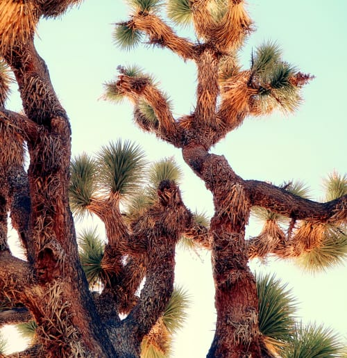 Photography by Kristin  Hart  Studios seen at Joshua Tree National Park - JOSHUA TREE - ABSTRACT