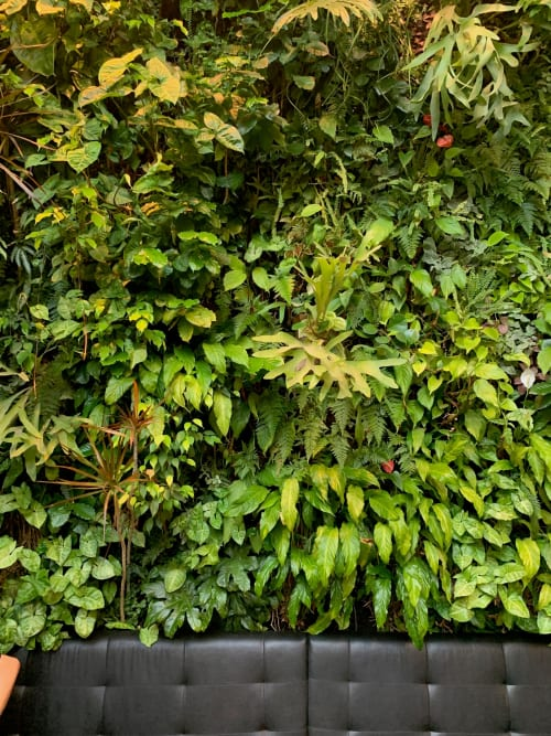 Wall Treatments by Laurent Corradi (Plant Wall Design) seen at Devoción, Brooklyn - Living Wall