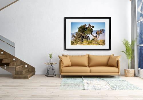 Photography by Yasmin Tajik Fine Art Prints seen at Cleveland Ohio, Findlay - Black Beauty, Lee Canyon, Nevada.