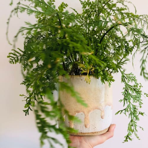 Plants & Landscape by Rhiannon Gill Ceramics seen at Wollongong, Wollongong - Pearl Pink Drippy Planter Pot