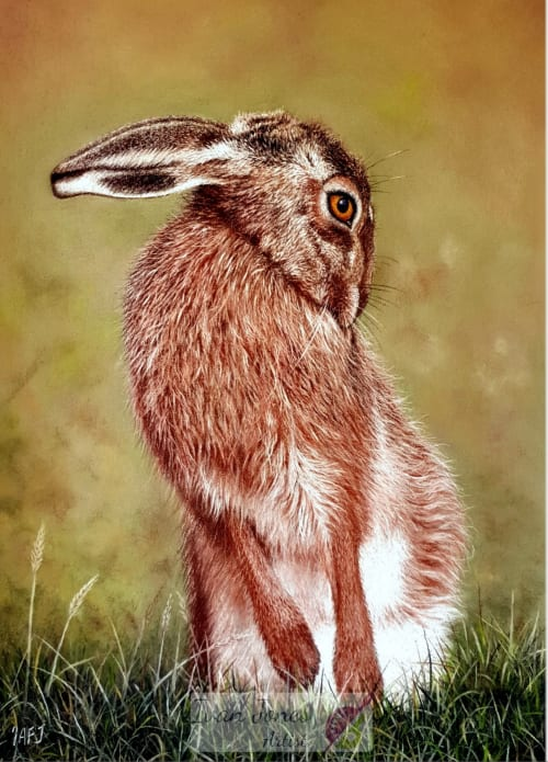 Paintings by Ivan Jones Artist seen at Private Residence, Leominster - Don't be Shy - pastel painting of a grooming hare