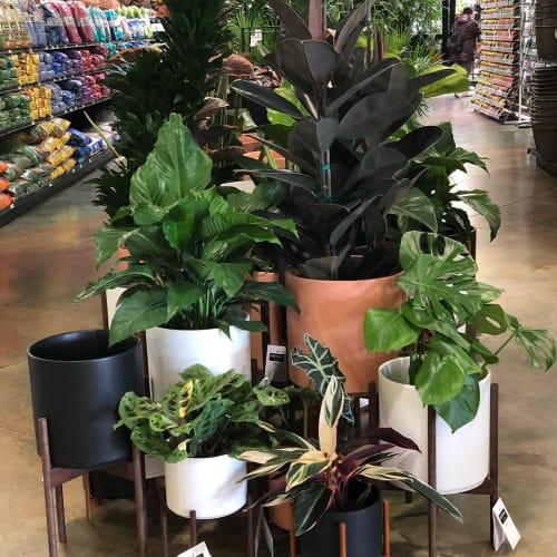 Vases & Vessels by LBE Design seen at Green Acres Nursery & Supply | Elk Grove, Elk Grove - Revival Ceramics Planters