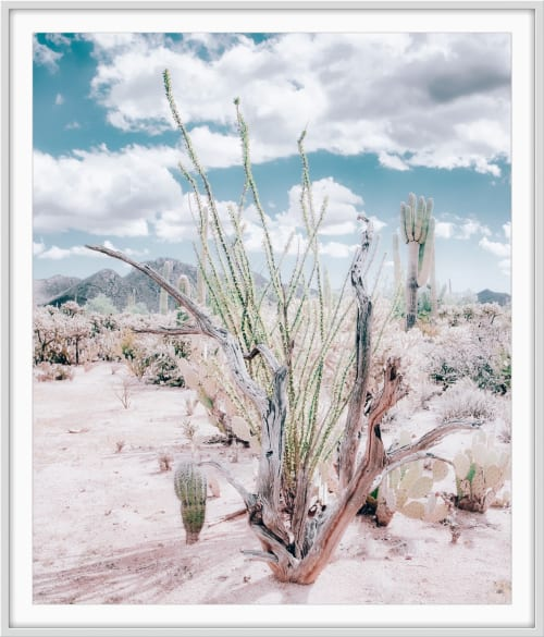 Photography by Kristin Hart Studios seen at Creator's Studio - CACTUS GARDEN - SOFT TEAL