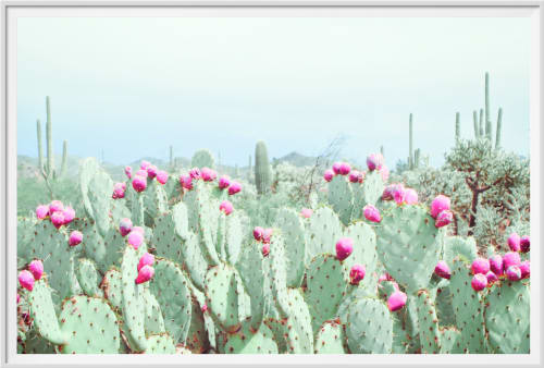 Photography by Kristin  Hart  Studios seen at Tucson, Tucson - MORNING FOG,  CACTUS GARDEN - MINT GREEN