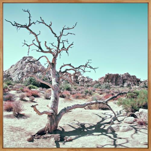 Photography by Kristin Hart Studios - PASTEL DESERT, CALIFORNIA 2