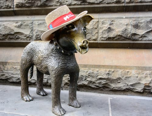 Architecture by Pamela Irving Studio + Gallery seen at Swanston Street, Melbourne - Larry La Trobe, Bronze dog in front of Melbourne Town Hall, City of Melbourne