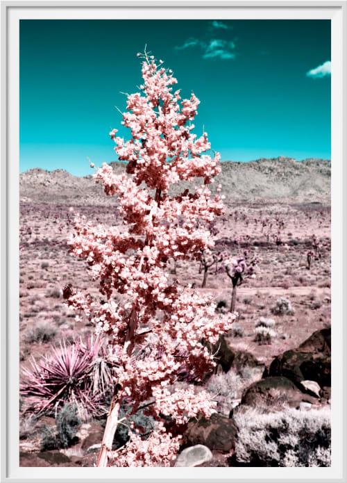 Photography by Kristin  Hart  Studios seen at Los Angeles, Los Angeles - DESERT BLOOM - CORAL