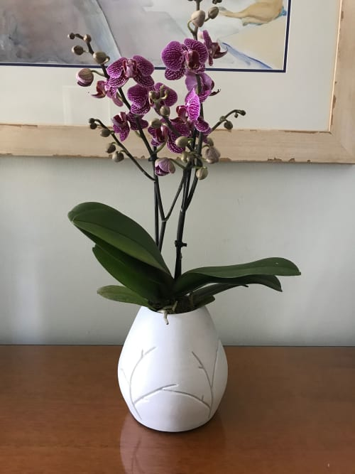 Vases & Vessels by Seoul Sister Studio seen at Private Residence, San Francisco - Branches.Planter