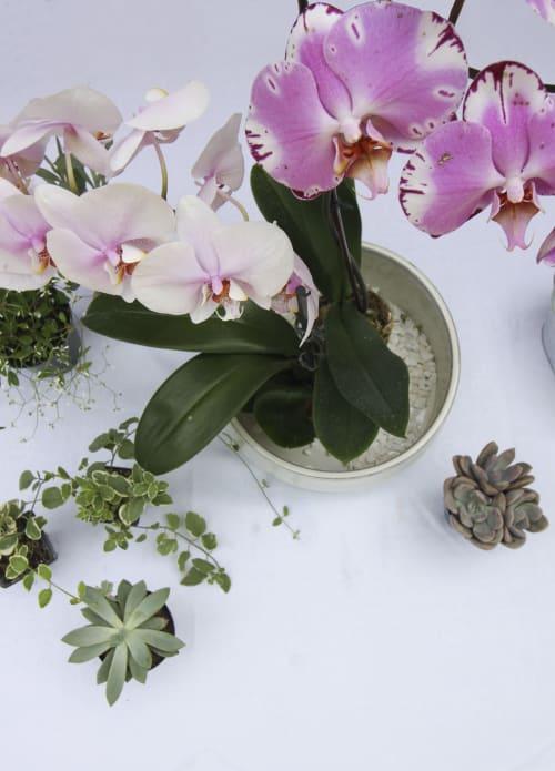 Plants & Flowers by SugarKane - Live Orchid Planter Centerpiece