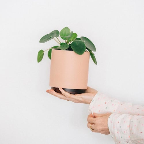 Vases & Vessels by LBE Design seen at Paiko, Honolulu - Ceramic Cylinder Planter