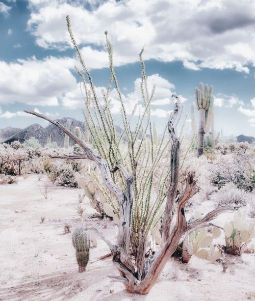 CACTUS GARDEN - SOFT TEAL   Photography by Kristin Hart Studios