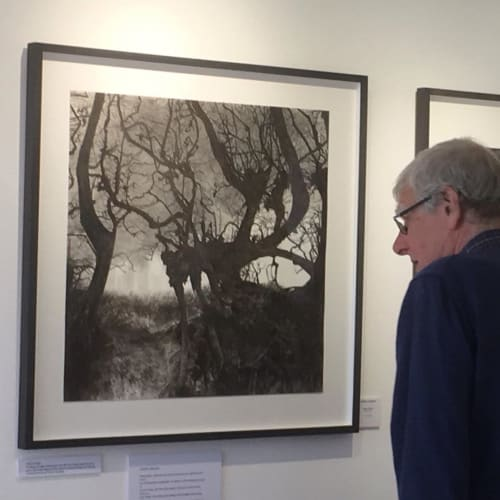 Paintings by Dominic Zwemmer seen at Rye Art Gallery, Rye - Edge of Iden