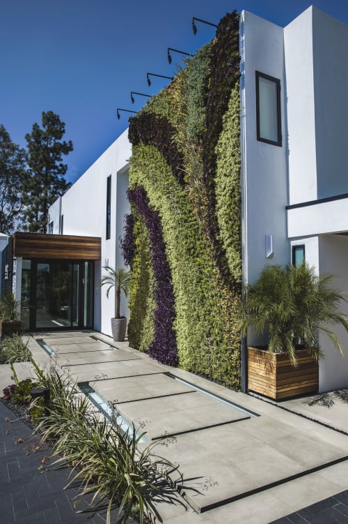 Murals by Seasons Landscaping seen at Private Residence, Beverly Hills - Living Wall by Scott Hutcheon
